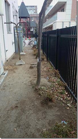 園舎の裏6か所に埋め、埋めた所に割り箸にひもをつけて立ててある(港北区、市立保育所)